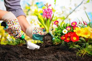 Gartenarbeit Blumenpflanzen