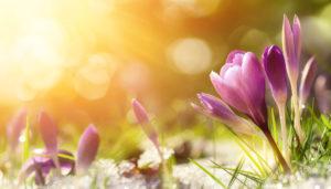 Blumen tauen auf in der Sonne