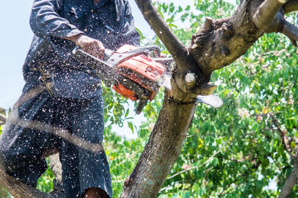 Arbeiter zerschneidet großen Ast mit Kettensäge