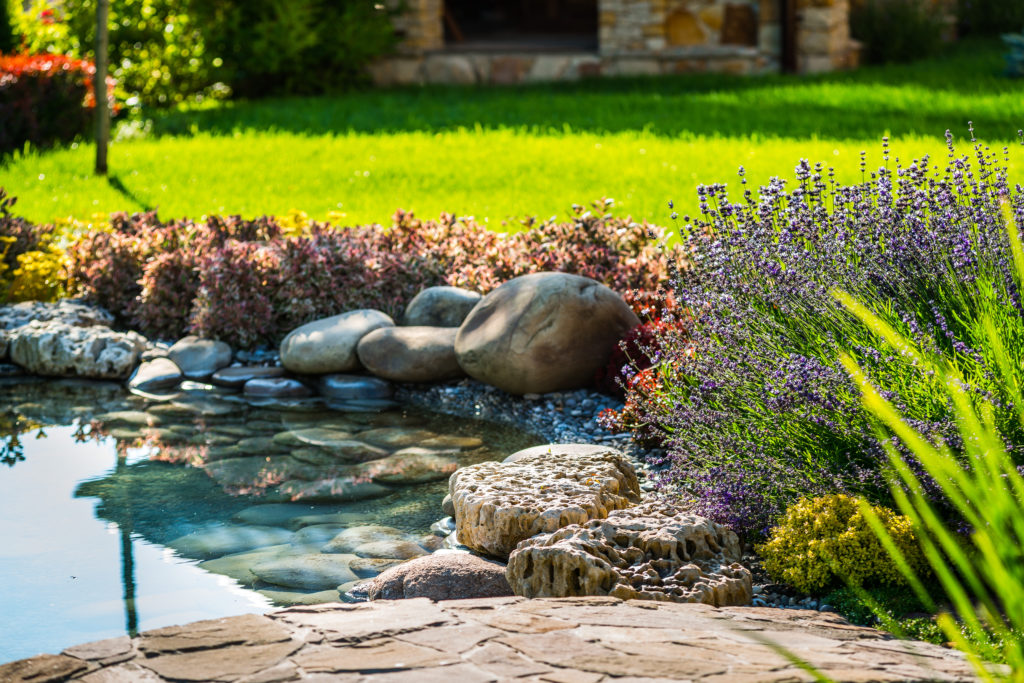 Gartenteich mit üppiger Vegetation
