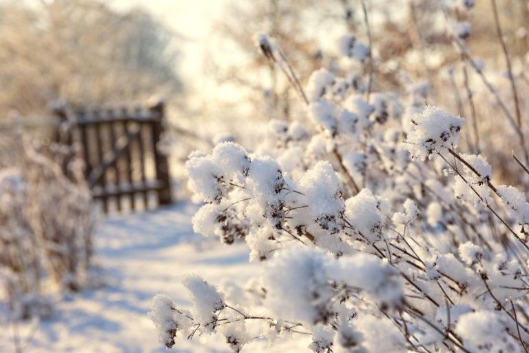 Eingeschneiter Garten