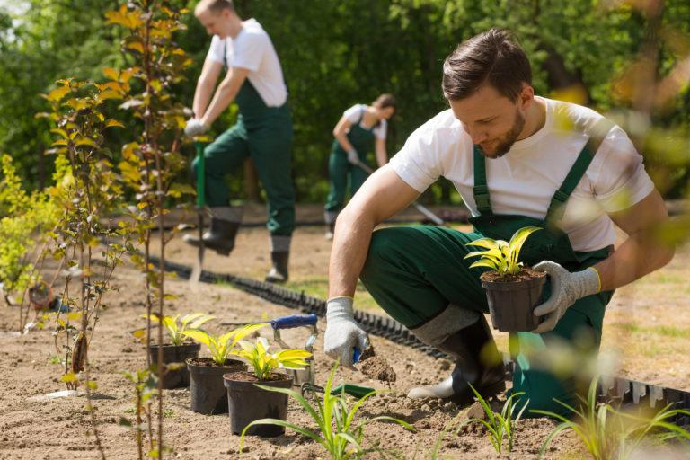 Gärtner pflanzen neue Gewächse