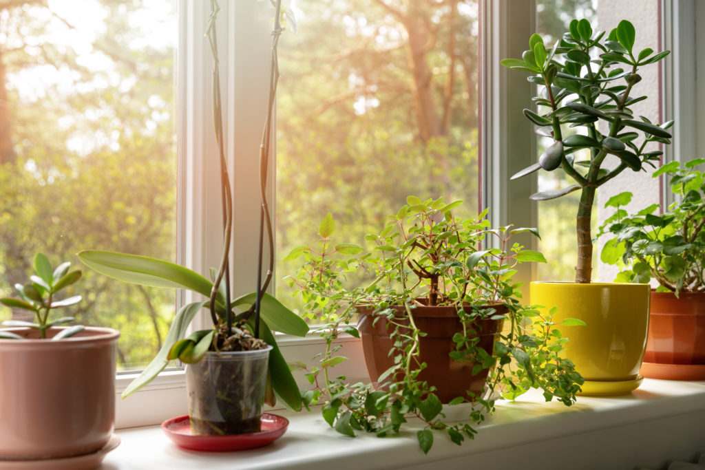 Pflanzen drinnen am Fenster