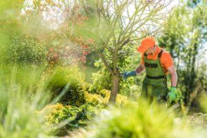 Mann bei der Baumpflege