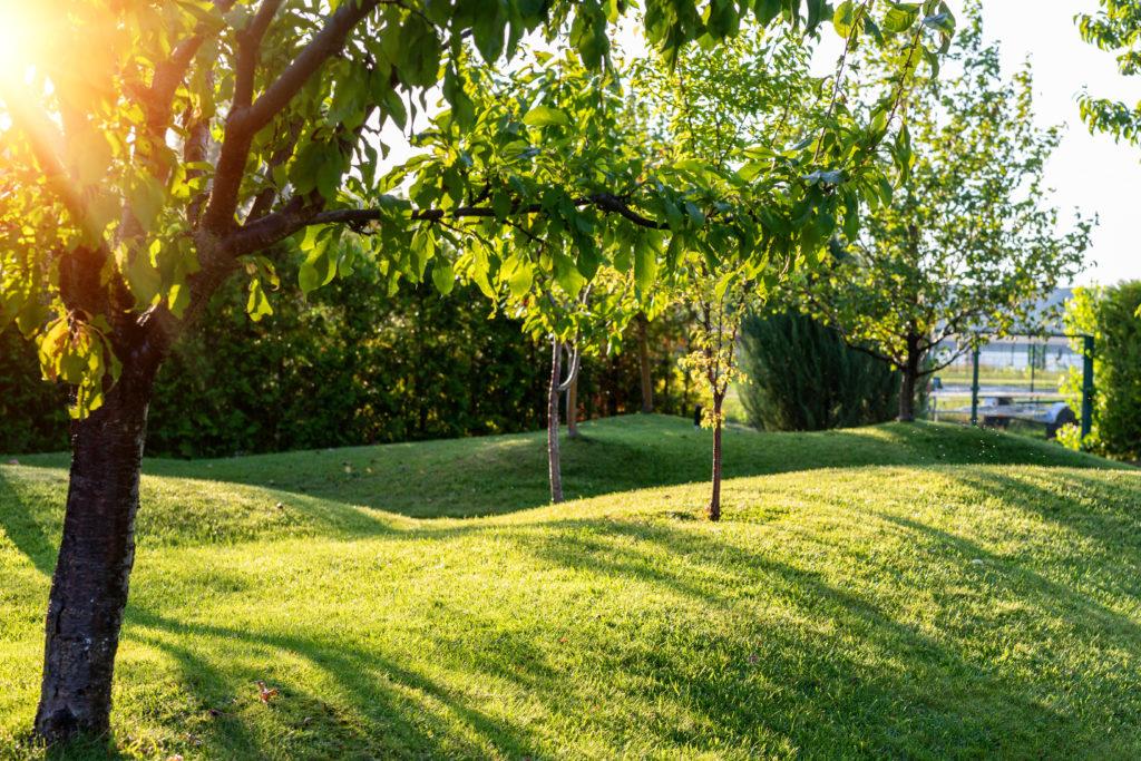 Grünfläche mit Bäumen
