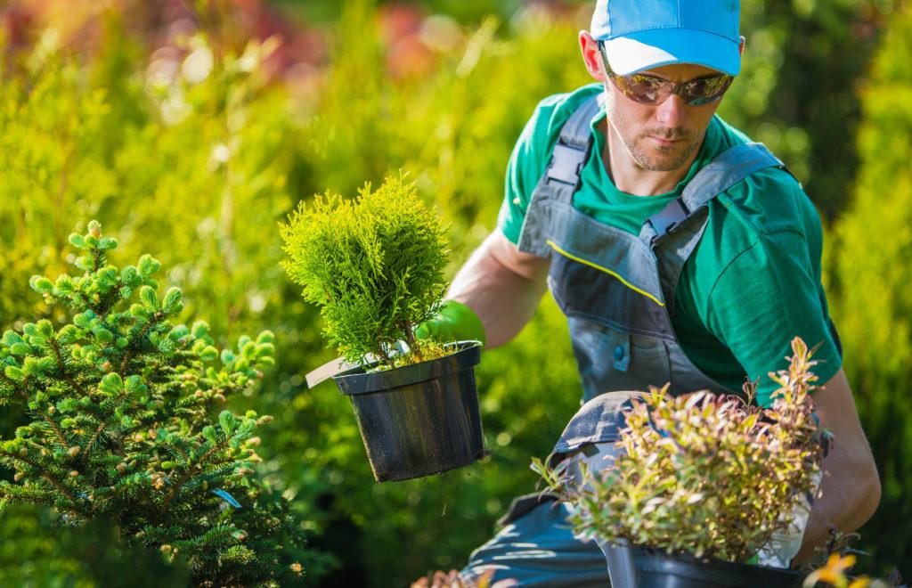 Mann pflanzt neue Pflanzen