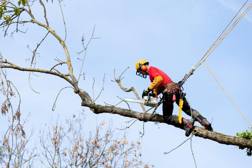Arbeiter im Baum schneidet Äste