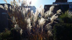 Winterfester Garten